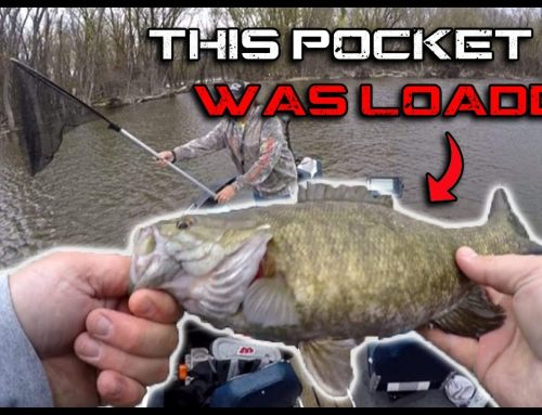 Tiny Pocket was LOADED with Bass!! (Mississippi River Bass Fishing)